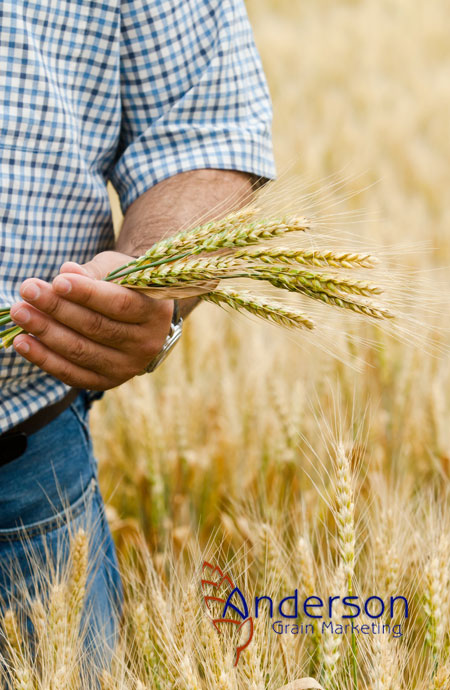 Anderson Grain Marketing Ltd